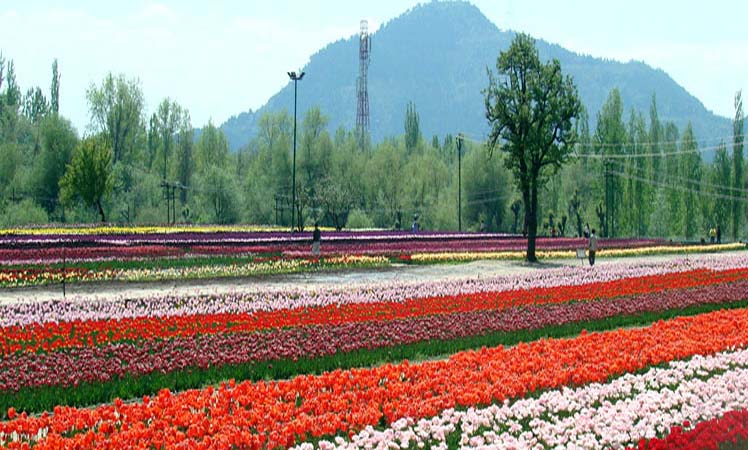 economic effect of tourism in jammu and kashmir Impact of demonetization on tourism industry  the importance of tourism as an instrument for economic development  tourism in jammu and kashmir consists of.