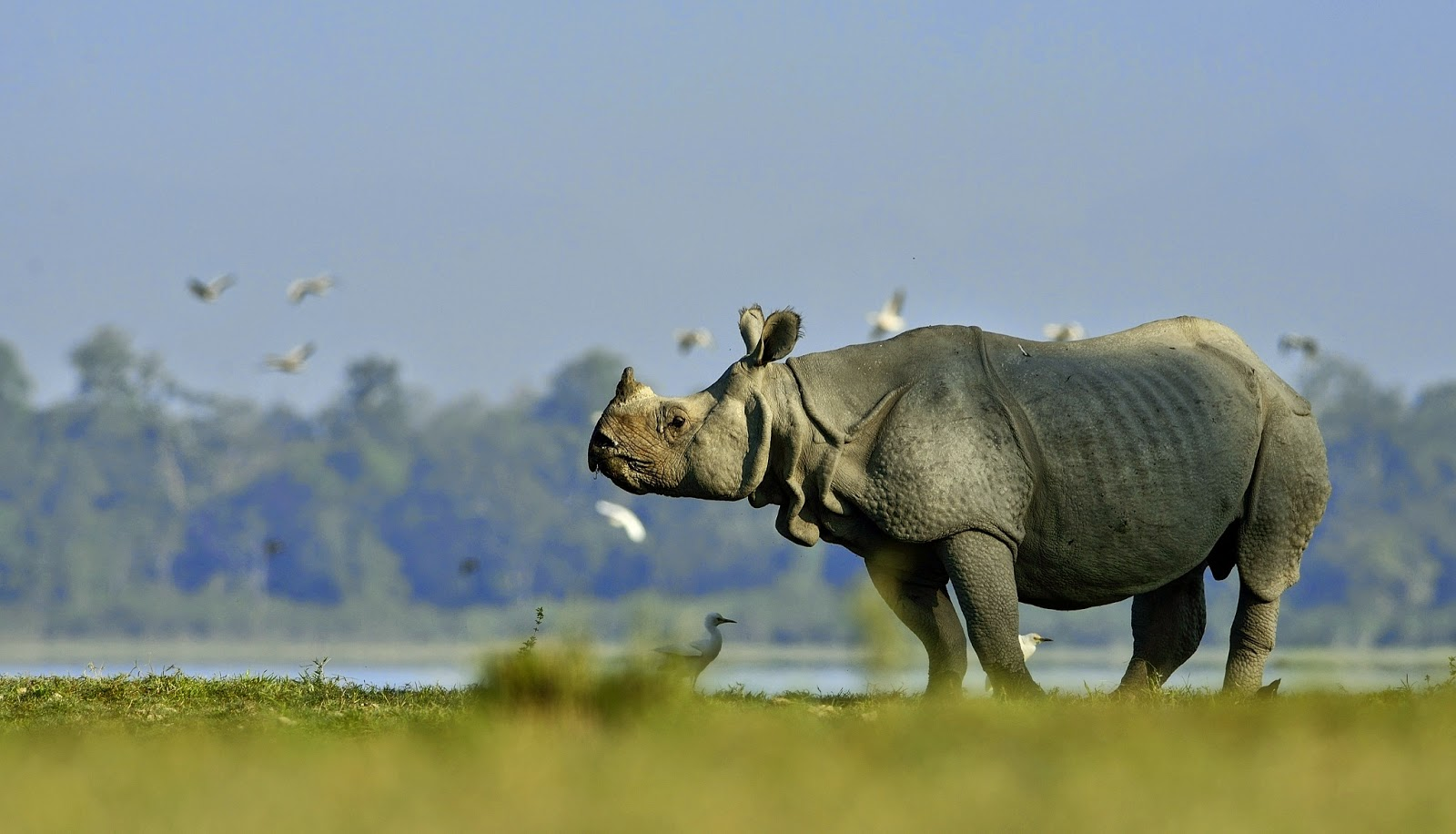 Wildlife Packages India